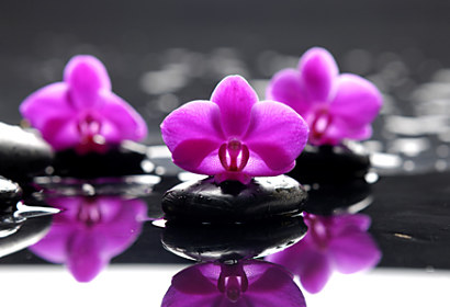 Fototapeta Purple orchid and Zen stones 24284