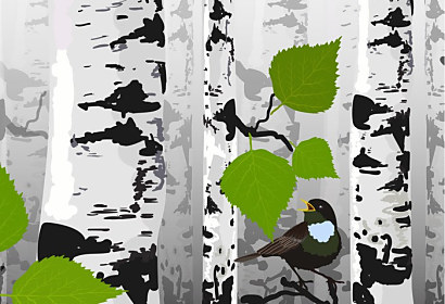 Tapeta Bird of birches ft-72912861