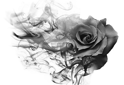 Fototapeta Smoky rose black white ft-209893237